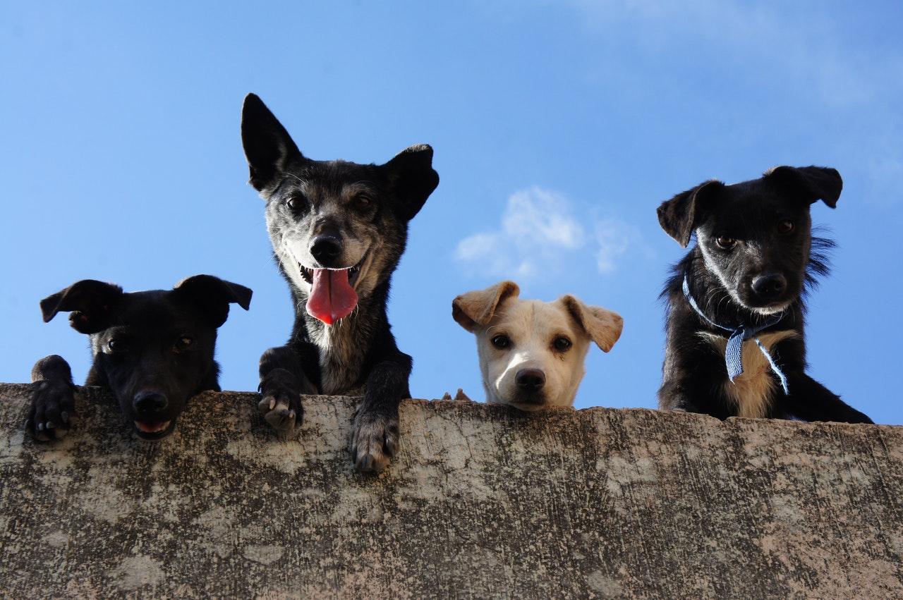 Goedkoopste verzekering voor jouw hond